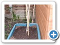 Replanted fruit cane - perfect use for a recycling box!